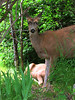 "deer 17  <a href=\""http://www.tabblo.com/studio/stories/view/254770/\"">www.tabblo.com/studio/stories/view/254770/</a>"