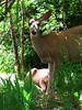 "deer 19  <a href=\""http://www.tabblo.com/studio/stories/view/253088/\"">www.tabblo.com/studio/stories/view/253088/</a>"