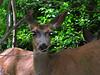 "deer 13  <a href=\""http://www.tabblo.com/studio/stories/view/252833/\"">www.tabblo.com/studio/stories/view/252833/</a>"