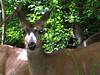 "deer12  <a href=\""http://www.tabblo.com/studio/stories/view/251135/\"">www.tabblo.com/studio/stories/view/251135/</a>"