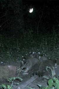 How many moths? How many raccoons?