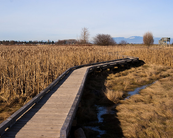 Centennial Beach Marsh 3