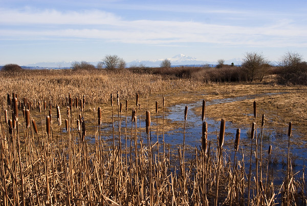 Centennial Beach Marsh 2