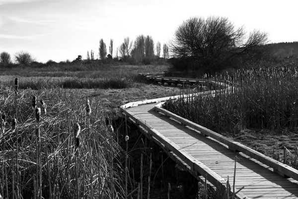 Centennial Beach Marsh BW