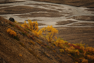 Fall colors, braided river on Polychrome Pass, Denali National Park