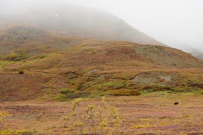 Hikers wait for a grizzly to move on, Denali National Park