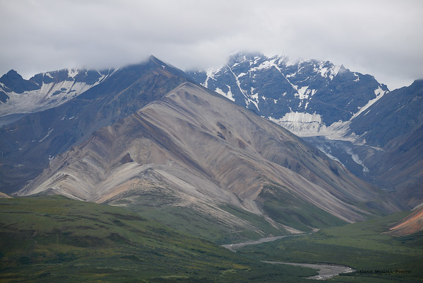 Denali Area, July 31 - Aug 2