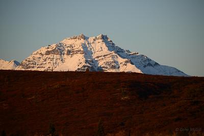 Early morning light in Denali.