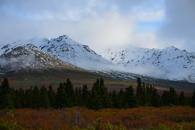 Autumn colors near Savage River, Denali National Park.
