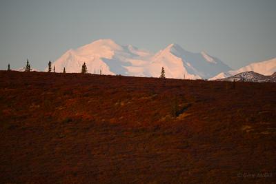 Early morning light on Denali.