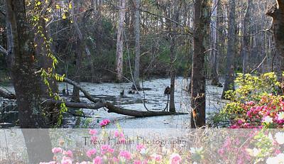 Paula's Swamp in Spring