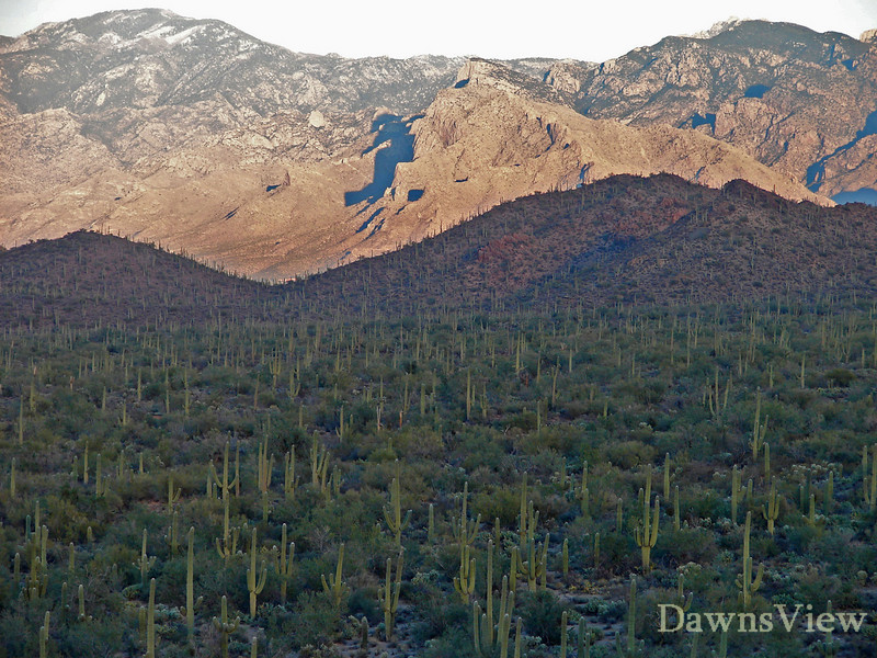 Tucson, Arizona-Taken from a in Picture Rocks looking towards Tucson and Catalina Mountains-January 9, 2011