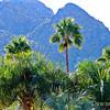 View from Hilton El Conquistador, Tucson, AZ Dec 2010