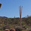 Saguaro Ribs, Tucson, AZ