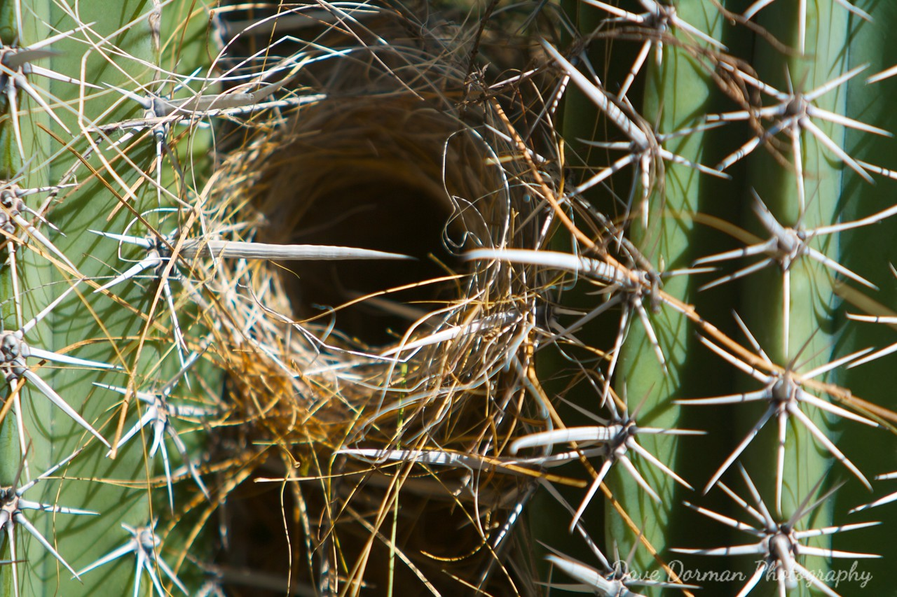 Humming Bird Nest