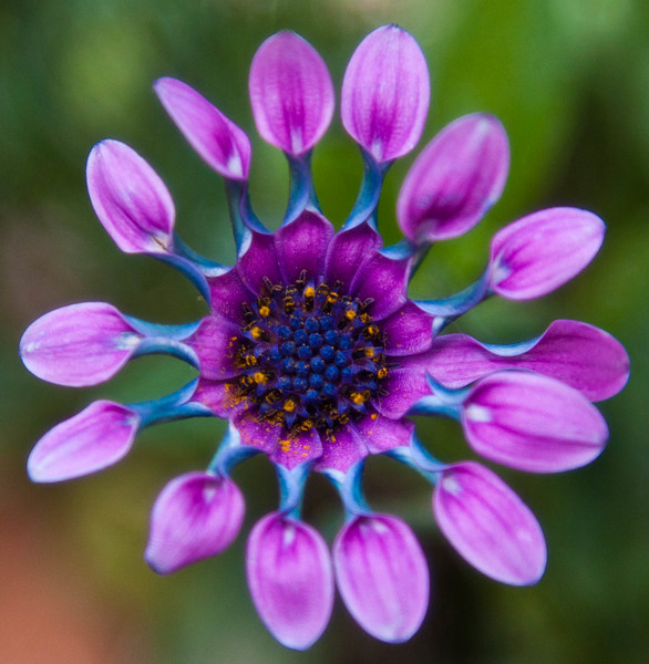 """I don't know the name of this delightful little flower.  It is only about 1 1/4"""" in diameter."""
