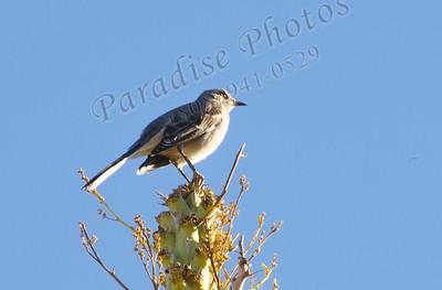 Bird at Bot Gardens 9040