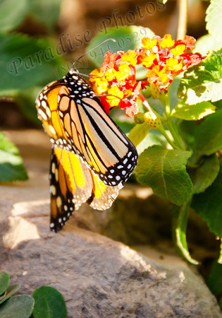 Butterfly on flower 9002