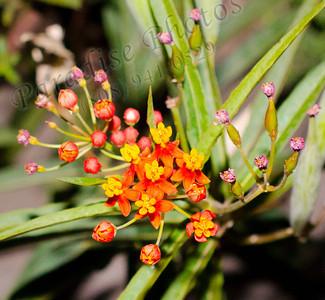 tiny orange yellow flowers 9161
