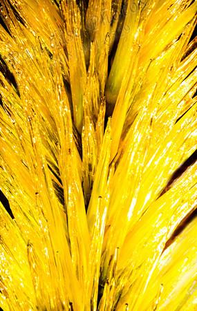 Yellow cactus fake 9194