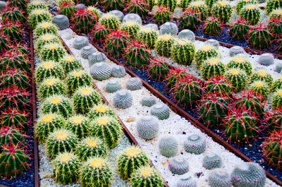 color cactus 9134