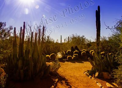 Cactus sun flare 9043cf