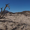 Dead tree, Mohave National Preserve, Baker, CA