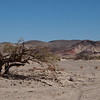 Shade tree, Mohave National Preserve, Baker, CA
