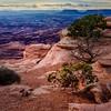 Needles Overlook in Canyonlands NP