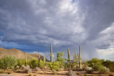 Storm clouds and Rain in the Sonoran Desert