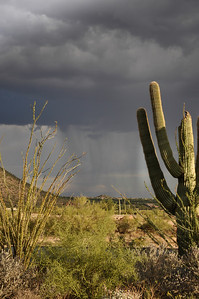 Rain in the Sonoran Desert
