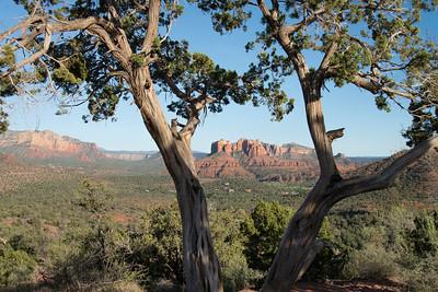 Red Rocks of Sedona through the Desert Trees