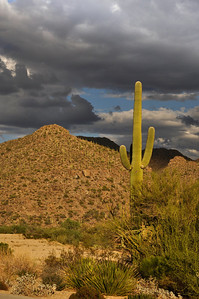 Afternoon clouds in the Sonoran desert.