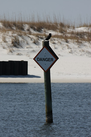 Does this bird look dangerous to you?
