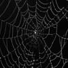 Dews Web