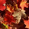 Foliage & Dews