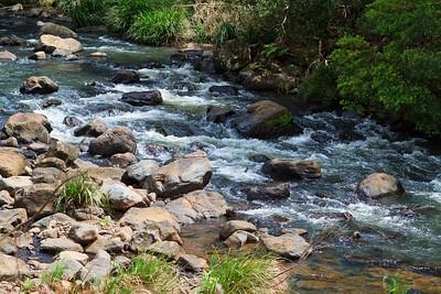 Obi Obi Creek - Birds, Nature & Flowers - North Maleny & Obi Obi Creek, Blackall Range, Sunshine Coast Hinterland, Queensland, Australia; Thursday 17 March 2011. Photos by Des Thureson.