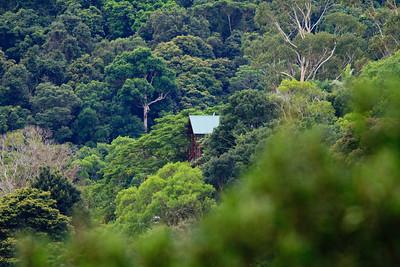 Birds, Nature & Flowers - North Maleny & Obi Obi Creek, Blackall Range, Sunshine Coast Hinterland, Queensland, Australia; Thursday 17 March 2011. Photos by Des Thureson.