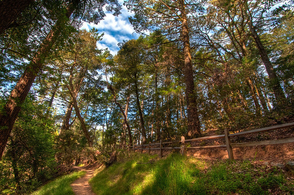 Mt.Tam dipsea trail in HDR