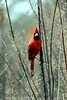 Mr_Red
