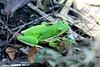 Feeling_Froggy