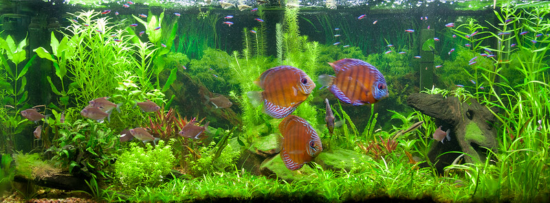 My Brown Discus