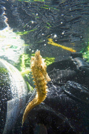 Dive/Snorkel Trip 07/16'