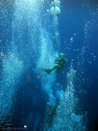 Diving in the Grand Cayman Islands