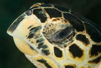DSCF0584 turtle