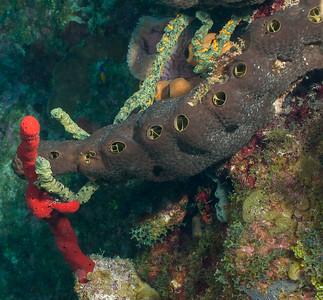 GreenFinger, Red Erect and ??  sponges