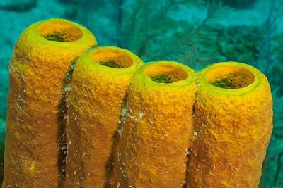 Yeoow Tube Sponge