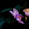 Snail Weed - Dixon Garden 11/17