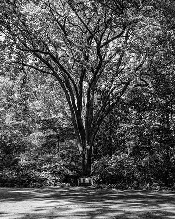 Dixon Gardens May 2017