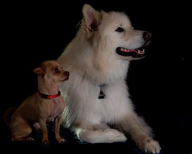 Falkor and Hunter